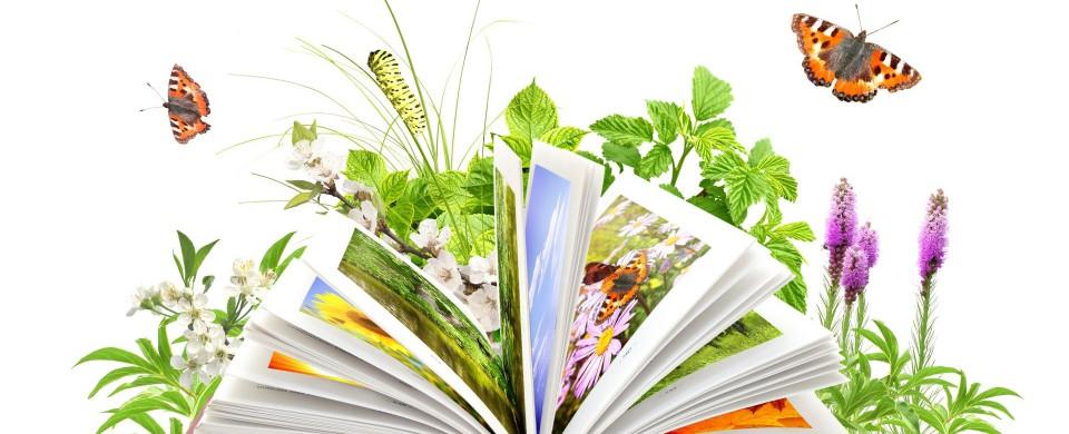 Экологически чистый ноутбук - Plantbook